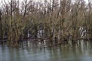 Nederland, Ooijpolder, 20-2-2020 In de rivier de Waal is het hoogwater. Het rivierwater is de uiterwaarden ingelopen en staat tot aan de voet van de dijk . Foto: Flip Franssen
