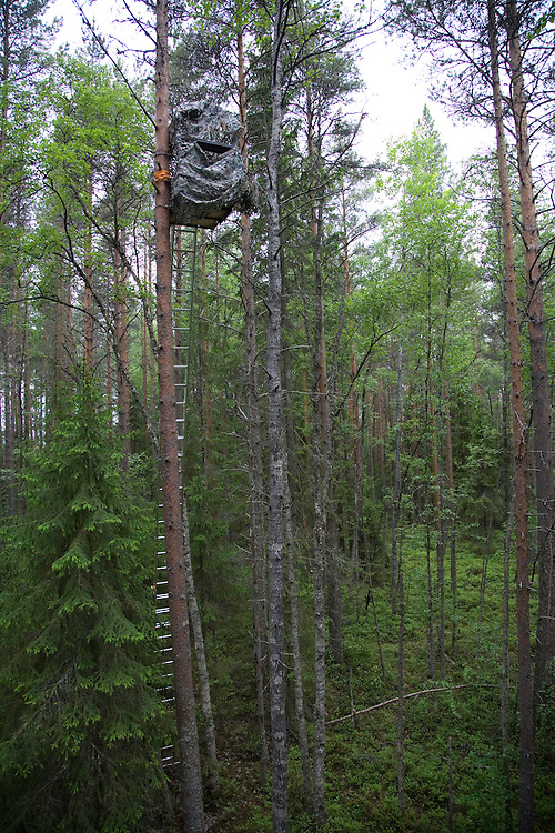 Hide attached to tree to allow photography of Great grey owl (Strix nebulosa) in boreal forest, Oulu, Finland.