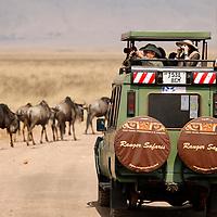 Africa, Tanzania, Serengeti. Safari jeep encounters wildebeest herd.