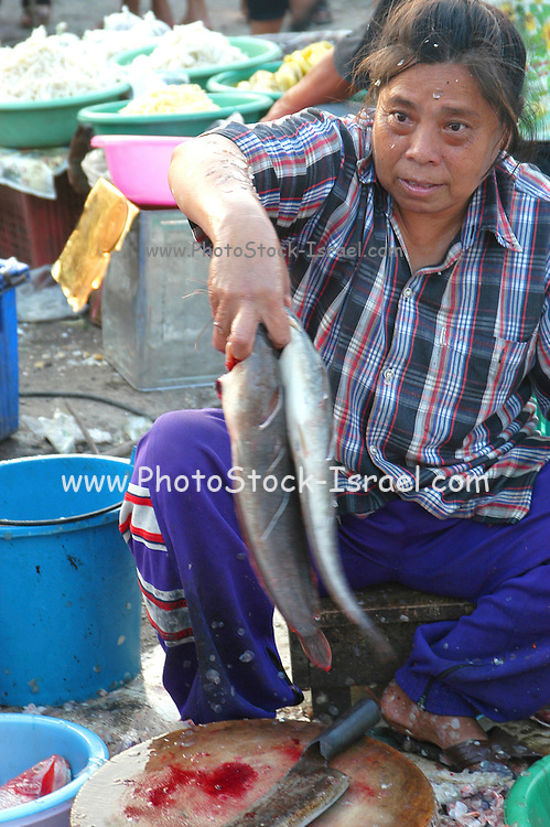 selling fish and sea food at the food Market at Lopburi, Thailand Lopburi is a city in Thailand, capital of the Lopburi province. The city is located about 150km north-east of Bangkok. Today the city is most famous because of its monkeys. Especially around the Khmer temple Prang Sam Yot hundreds of Crab-Eating Macaques (Macaca fascicularis) live in the middle of the city. Especially during the Monkey festival in November they are fed by the local people, but being used to humans they steal whatever food they can find.