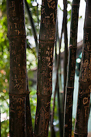 Visitors carve their names in the bamboo growing in A-Ma temple, Macau