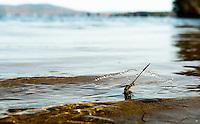 Bartlett Beach Laconia NH (Karen Bobotas/for the Laconia Daily Sun)