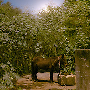 A small pony. On the edge of the city, horses are kept under highway bridges at night while their owner sleeps nearby. The horses are used to pull horse carriage for tourists during the day.