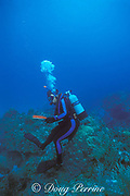 scuba diver sitting on coral head,<br /> Bahamas ( Western Atlantic Ocean )
