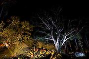 Brumadinho_MG, Brasil...Jardim no Museu de Arte Contemporanea de Inhotim (CACI)...The garden in the Inhotim Contemporary Art Museum (CACI)...FOTO: BRUNO MAGALHAES / NITRO