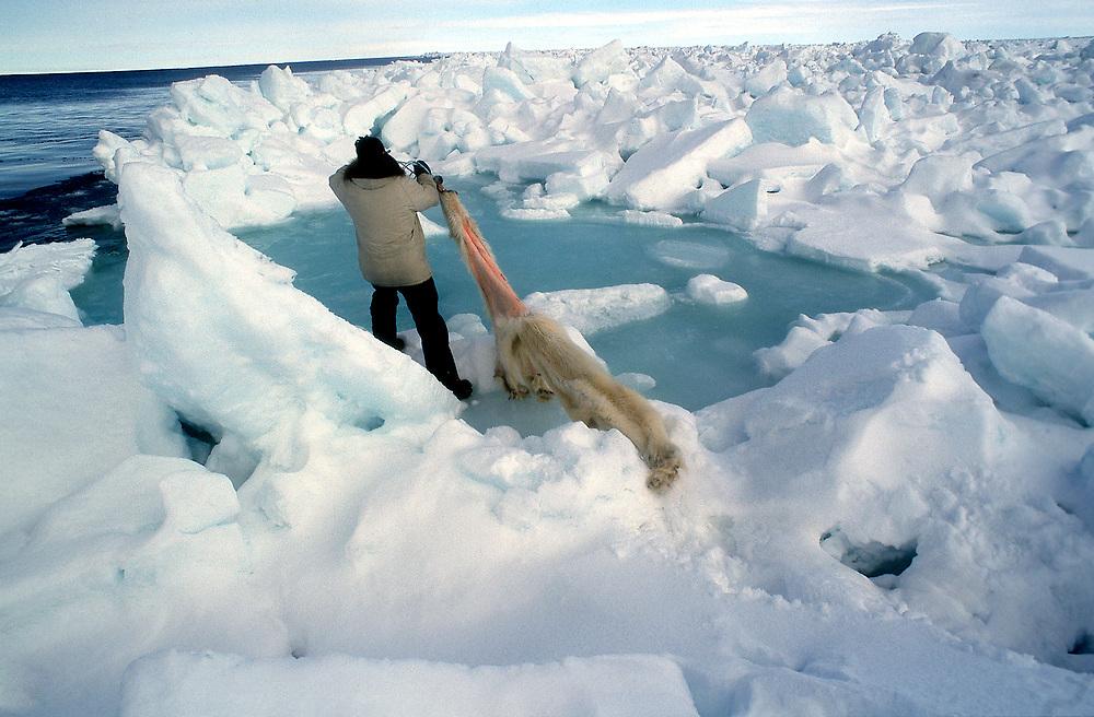 Alaska native man carrying a polar bear pelt