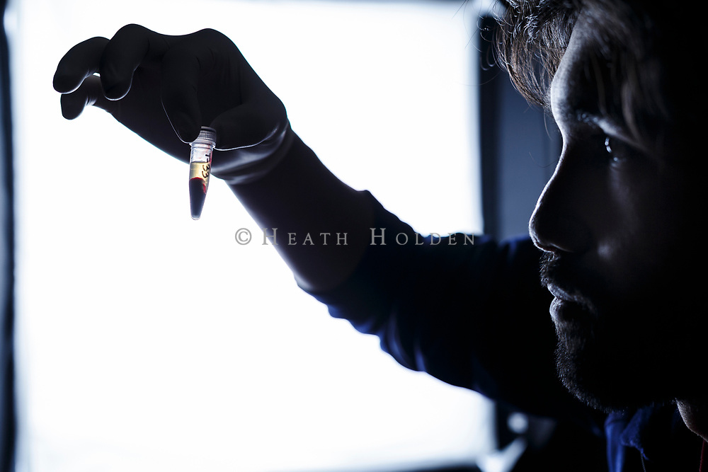 """University of Tasmania Phd researcher Manuel Ruiz prepares serum samples after a day of devil trapping and check ups. Serum from both healthy and diseased devils are analysed for unique anti-bodies which might help with vaccine production. This sample is from devil T-33, who the researchers have named """"Captain Caveman""""."""