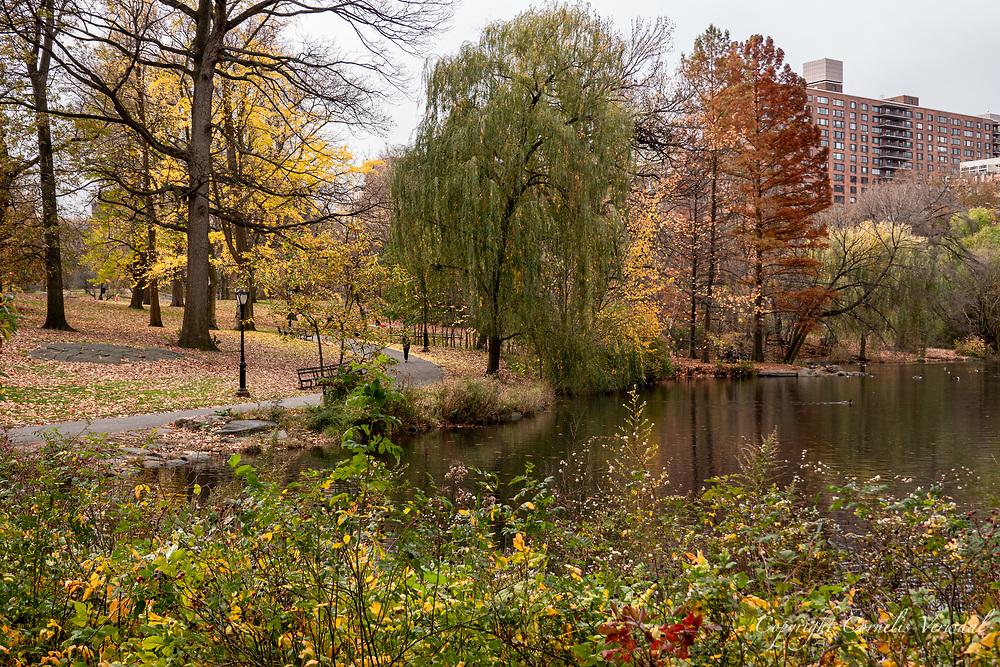 The Pool in Central Park, Nov. 17, 2020.