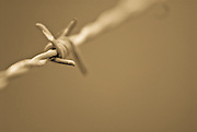 Close up picture of barbed wire in sepia.