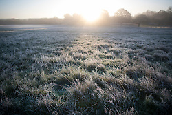 © Licensed to London News Pictures. 04/11/2020. London, UK. A frost covered landscape at sunrise in Richmond Park, south west London on a cold Autumn morning. Photo credit: Ben Cawthra/LNP