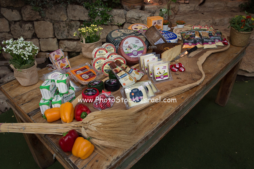 Assortment of cheeses Goat, Sheep and cow dairy products