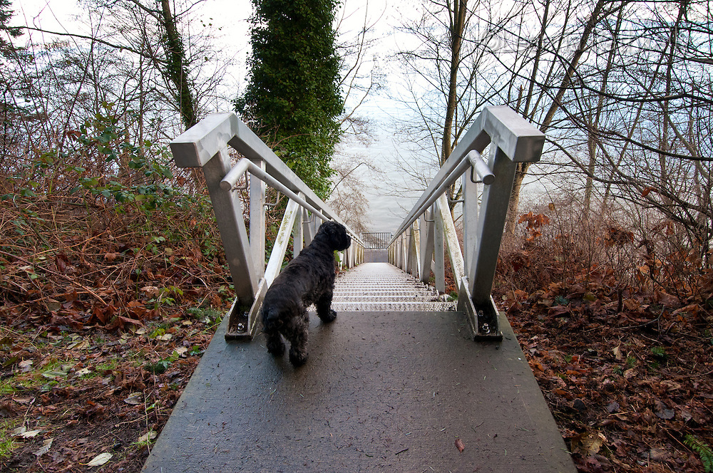 A steep metal staircase descends to Margaret Bay, in Saanich, BC Victoria