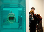© Licensed to London News Pictures. 02/04/2012. London, UK . People look at 'The Physical Impossibility of Death in the Mind of Someone Living 1991', a 14 ft. shark suspended in formaldehyde. The Tate Modern presents the first substantial retrospective of British artist Damien Hirst. The exhibition tuns 4th April - 9th September at Tate Modern London. Photographers Stephen Simpson/LNP