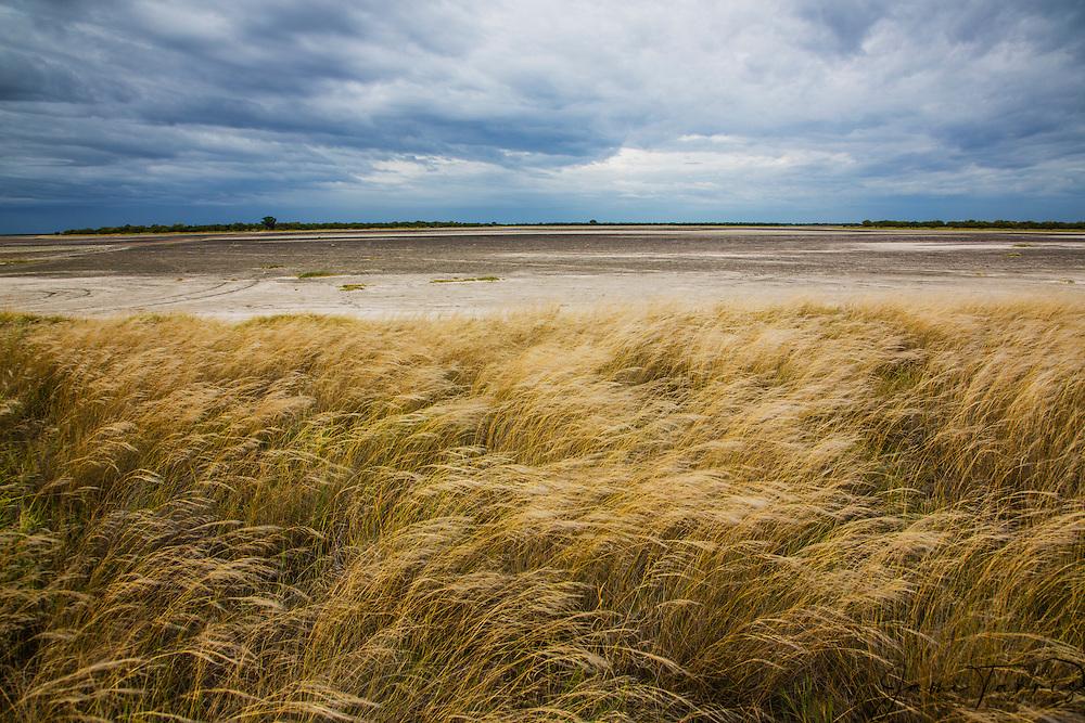 The golden grasses of the Kalahari under a cloudy day in the wet season,  Kalahari, Botswana, Africa