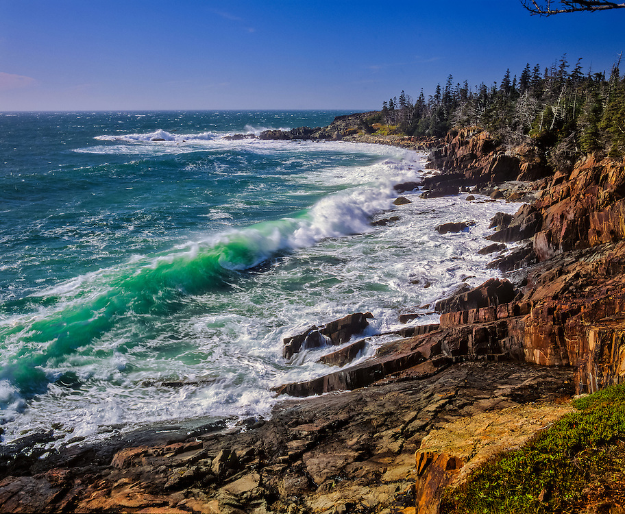 Rolling waves & rugged granite shoreline, spruce trees, view to Green Point, Quoddy Head State Park, ME