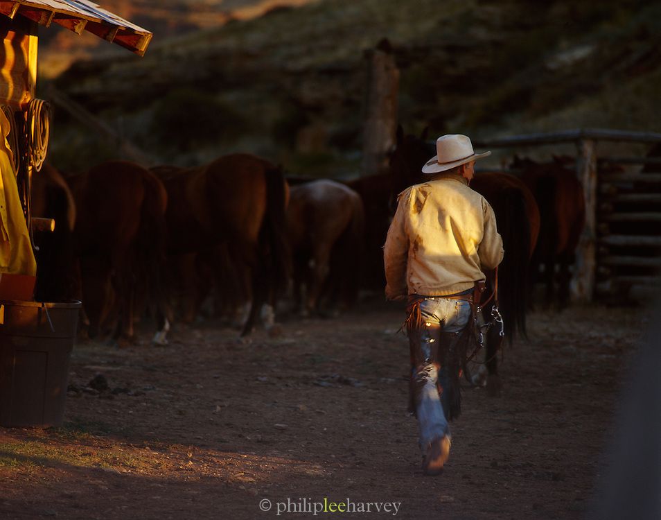 A Cowboy working on a ranch in Montana, USA