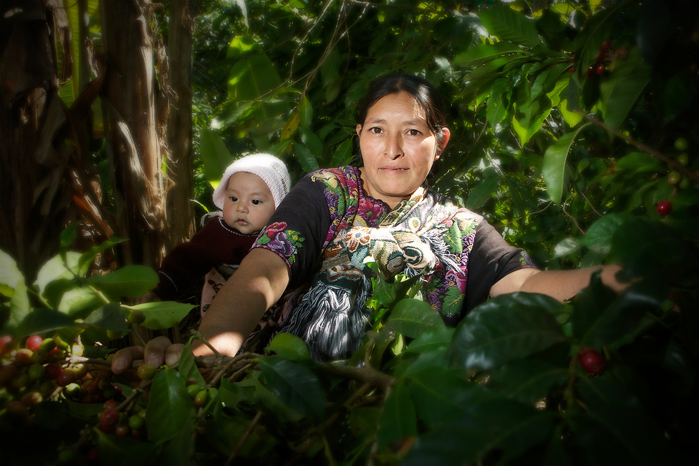 Magdalena Juan, picking coffee on her small plot of land near Barillas, Huehuetenango, Gautemala. Magdalena is affiliated to ASOBAGRI and produces Feminine Coffee, which is only produced by women.