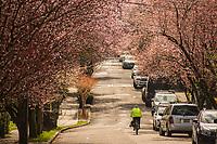 Montlake Neighborhood (March 21, 2020).