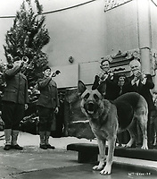 1975 Rin Tin Tin's footprint ceremony at the Chinese Theater