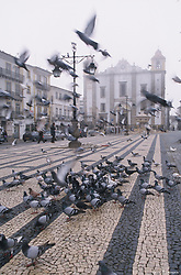Europe, Portugal, Evora, pigeons and cathedral in plaza