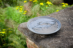 Bird bath or insect friendly shallow dish
