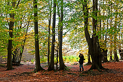©Licensed to London News Pictures 22/10/2020  <br /> Sevenoaks, UK. A photographer taking pictures of the autumn trees. The calm after storm Barbara today with bright autumnal colours at Toys Hill woodland in Sevenoaks, Kent.  Photo credit:Grant Falvey/LNP