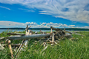 Driftwood at Penouille Beach along the Gulf of St. Lawrence . Appalachians' northeasternmost tip in North America. <br />Forillon National Park<br />Quebec<br />Canada