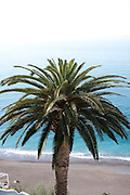 Detail of a palm tree above the Mediterranean, Positano, Campagna, Italy.