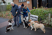 Pet dog owners gather their assorted breeds for an Instagram post on the Dulwich Village Insta feed, outside St. Barnabas community hall in Dulwich Village in the south London borough of Southwark, serving as a polling station for the UKs General Election 2 weeks before Christmas, on 12th December 2019, in London, England.