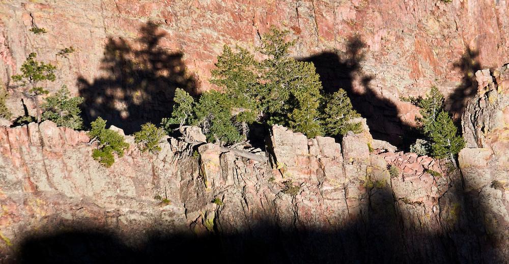 Trees on a narrow rock ridge in Eldorado Canyon State Park, Colorado.
