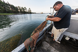 Leroy Gilbert Changing Nets For  Harvesting Rockweed