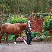 Irish Stallion Trail 2020