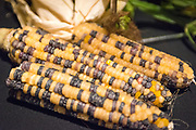 CORN (VEGETABLE), Zea mays<br />