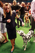 A Dalmation at The 134th Westminster Kennel Club Dog Show Presented by Pedigree held at Madison Square Garden on February 15, 2010..In 2010, the 134th Annual Westminster Kennel Club Dog Show will add to its legacy as the greatest dog show in the world. It persists as the second longest continuously held sporting event in this country, just one year behind the Kentucky Derby. ..