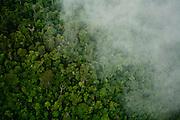 Parauapebas_PA, Brasil. ..Área preservada da Floresta Amazônica- Floresta Nacional de Carajas, Para...Preserved area of the Amazon Forest, National Forest of Carajas, Para...Foto: JOAO MARCOS ROSA / NITRO.