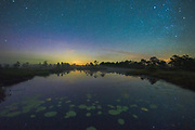 """The floating leaves of the yellow water-lily (Nuphar lutea) between the reflections of stars in still bog pool with a bit of afterglow visible along the horizon, nature reserve """"Niedrāju–Pilkas purvs"""", Latvia Ⓒ Davis Ulands 