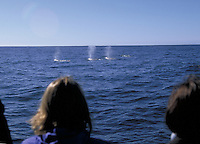 People on whale watching party boat off the coast of Fort Bragg, California