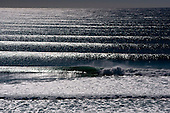 Surf Gallery