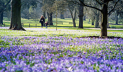 © Licensed to London News Pictures. 11/03/2015. Kew, UK. A young woman and boy walk through the displays.People enjoy the crocus displays at Kew Garden's today 11th March 2015. The display features the variety Crocus tommasinianus. The Uk has enjoyed warm sunny weather this week.  Photo credit : Stephen Simpson/LNP