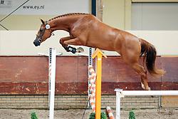 Boviana<br /> KWPN Paardendagen 2009<br /> © Hippo Foto - Leanjo de Koster
