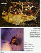 Publication: FOCUS (United Kingdom), #178 July 2007, Photography by Heidi & Hans-Juergen Koch/animal-affairs.com