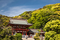 Tsurugaoka Hachimangū (鶴岡八幡宮?) is the most important Shinto shrine in the city of Kamakura, Kanagawa Prefecture, Japan. The shrine is at the geographical and cultural center of the city of Kamakura, which has largely grown around it and its 1.8 km approach. It is the venue of many of its most important festivals, and hosts two museums.<br /> <br /> Tsurugaoka Hachimangū was for most of its history not only a Hachiman shrine, but also a Tendai Buddhist temple, a fact which explains its general layout, typical of Japanese Buddhist architecture.
