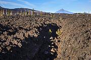 USA, Oregon, Mt. McKenzie Pass Scenic Byway,  Mt Jefferson and lava channel.