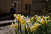 Spring flowers in Termes, France. Termes is a commune in the Aude department in southern France.