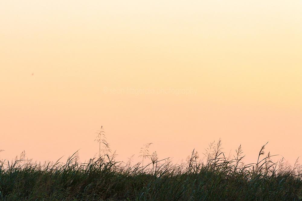 Native Grasses in summer, Trinity River Audubon Center, Dallas, Texas, USA.