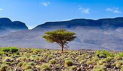 Looking towards the Iriki National Park, near Tazzarine, Morocco<br /> <br /> (c) Andrew Wilson | Edinburgh Elite media
