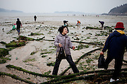 """Visitors collecting mussels during low tide at Hoedong shore (Jindo Island). Jindo is the 3rd biggest island in South Korea located in the South-West end of the country and famous for the """"Mysterious Sea Route"""" or """"Moses Miracle"""" which is happening during full moon in spring."""