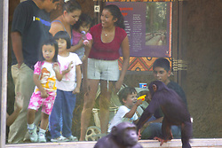 Zoo Visitors Interacting With Chimpanzee, Los Angeles Zoo
