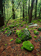 Moss covered boulders, forest, Yosemite Valley, Yosemite National Park