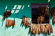 Dried leaves hang on a green wall of a house in Java, Indonesia, Southeast Asia